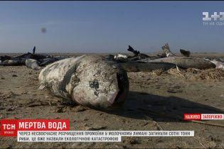 У Молочному лимані загинули сотні тон піленгасу