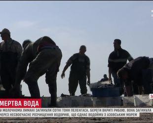 У Запоріжжі в Молочному Лимані загинуло сотні тонн риби