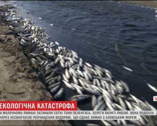 В Запорожье берега Молочного Лимана покрыло тоннами мертвой рыбы