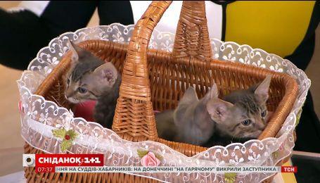 Врятовані маленькі кошенята шукають родину