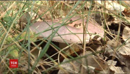 На Черниговщине мужчины похитили микроавтобус, чтобы отобрать партию лесных грибов