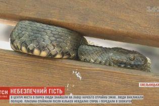 Майже метрова змія наполохала перехожих в парку Хмельницького