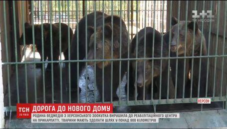 Довга подорож: родина ведмедів з зоопарку Херсона вирушила на Прикарпаття
