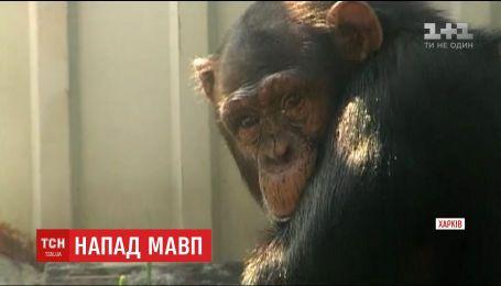 В харьковском эко-парке смотритель нарушил правила безопасности и пострадал от нападения обезьян
