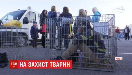 В Луцке зоозащитники залезли в клетки и просили посетителей не идти на спектакль в цирк