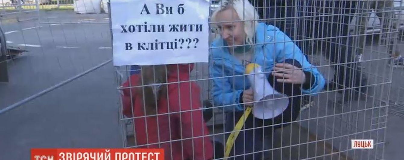 Луцкие зоозащитники в клетках провели акцию против странствующего цирка