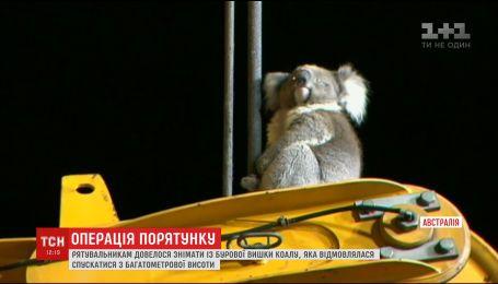 В Австралии спасатели снимали коалу с буровой вышки, которая не могла оттуда слезть