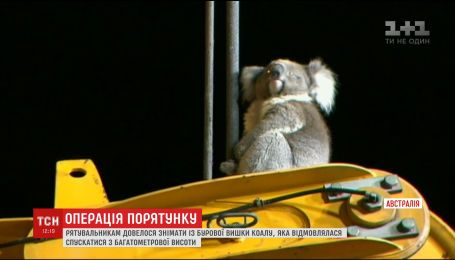В Австралії рятувальники знімали коалу з бурової вишки, яка не могла звідти злізти