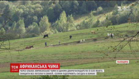 На Львівщині люди звинувачують односельчанку у штучному спалаху африканської чуми