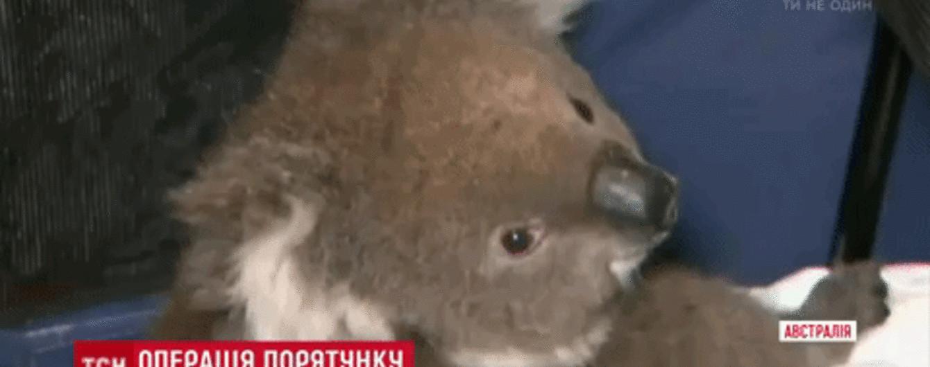 В Австралии с буровой вышки пришлось снимать перепуганную коалу