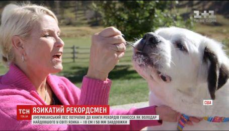 Американский пес попал в книгу рекордов Гиннесса за самый длинный язык на планете