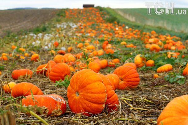 Велетенські гарбузи та кришталево чисті струмки. Reuters показало осінь у Швейцарії