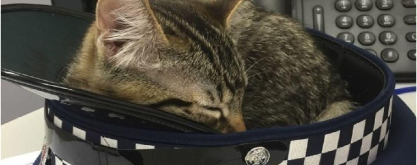 Instagram кота-полицейского Сникерса и провокационные свадебные фото. Тренды Сети