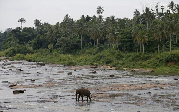 Щоденне плавання та годування із плячешки: Reuters показало дитбудинок для слонів на Шрі-Ланці