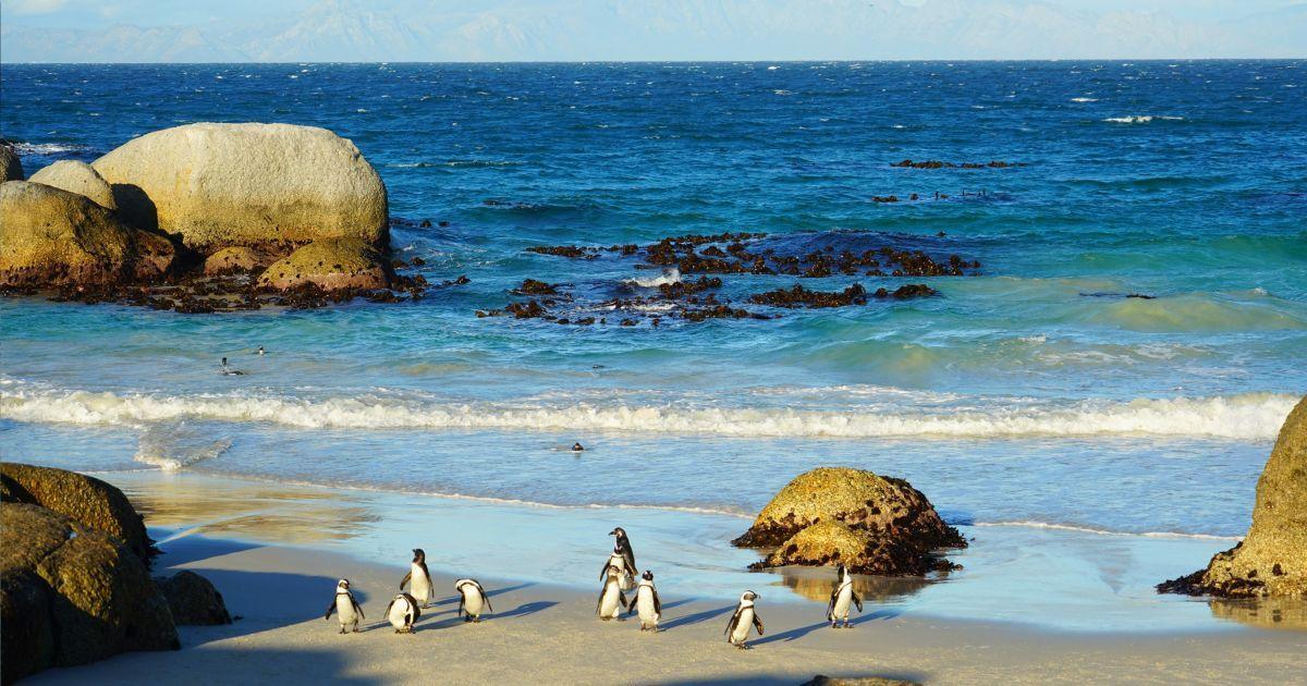 Незабутні враження на все життя: як я закохалась у Південну Африку