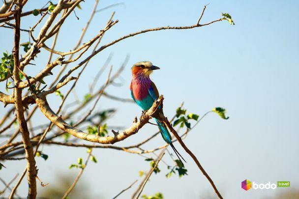 Коли подих перехоплює щомиті: неймовірна краса природи Південної Африки