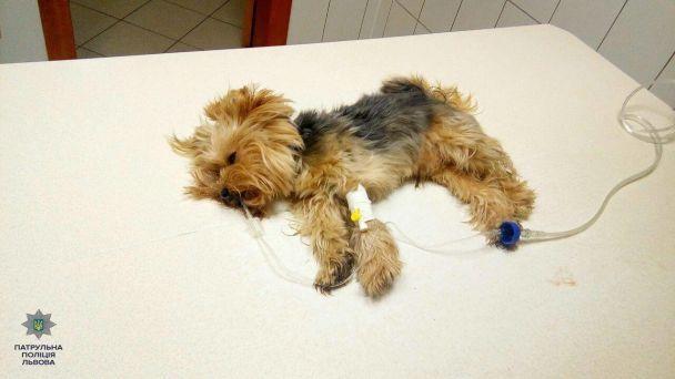 Во Львове полицейские спасли собаку, которую сбил и оставил умирать водитель