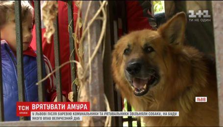 Во Львове спасли собаку, на будку которой упал огромный дуб