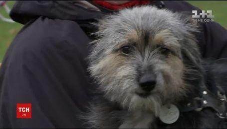 В Чернигове устроили конкурс для собак, которые не имеют породу или не дотягивают до стандартов красоты