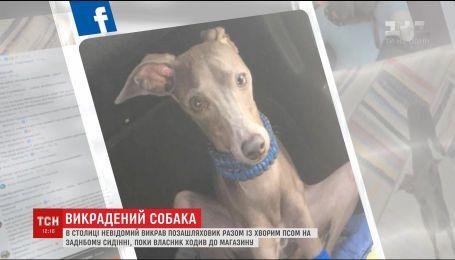 У Києві третій день шукають собаку, яку вкрали разом з дорогим позашляховиком