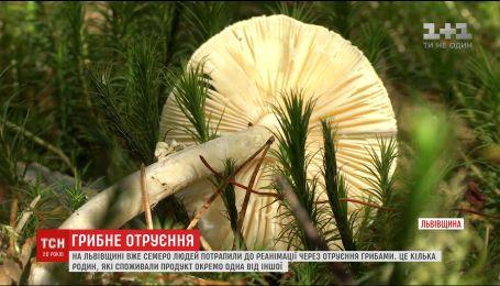 Шестеро людей потрапили в реанімацію через отруєння грибами