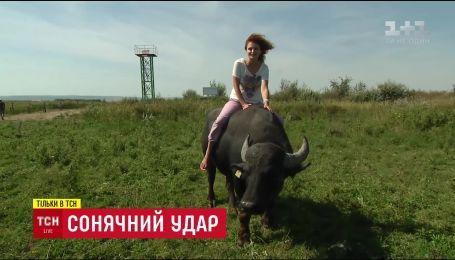 Через зміни клімату Україна стала домівкою для незвичних звірів