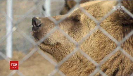 Во Львове спасли бурую медведицу, которая жила в тесной клетке в ресторане