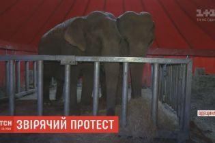 Зоозащитники с дракой отстаивали права животных из передвижного цирка в Черноморске