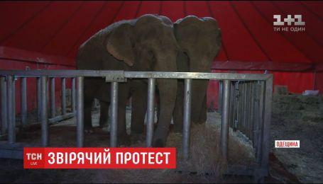 Маленькие клетки и отсутствие доступа к воде: активисты проверили условия содержания животных в цирке