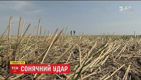Через глобальне потепління в Україні змінилися умови та місця вирощування сільськогосподарських культур