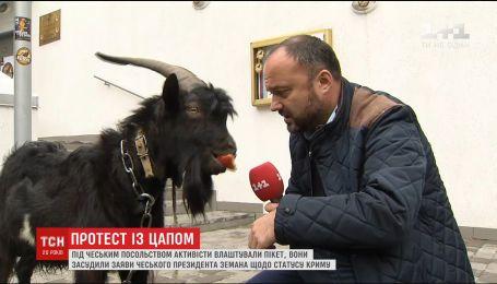Українські активісти поглузували із президента Чехії