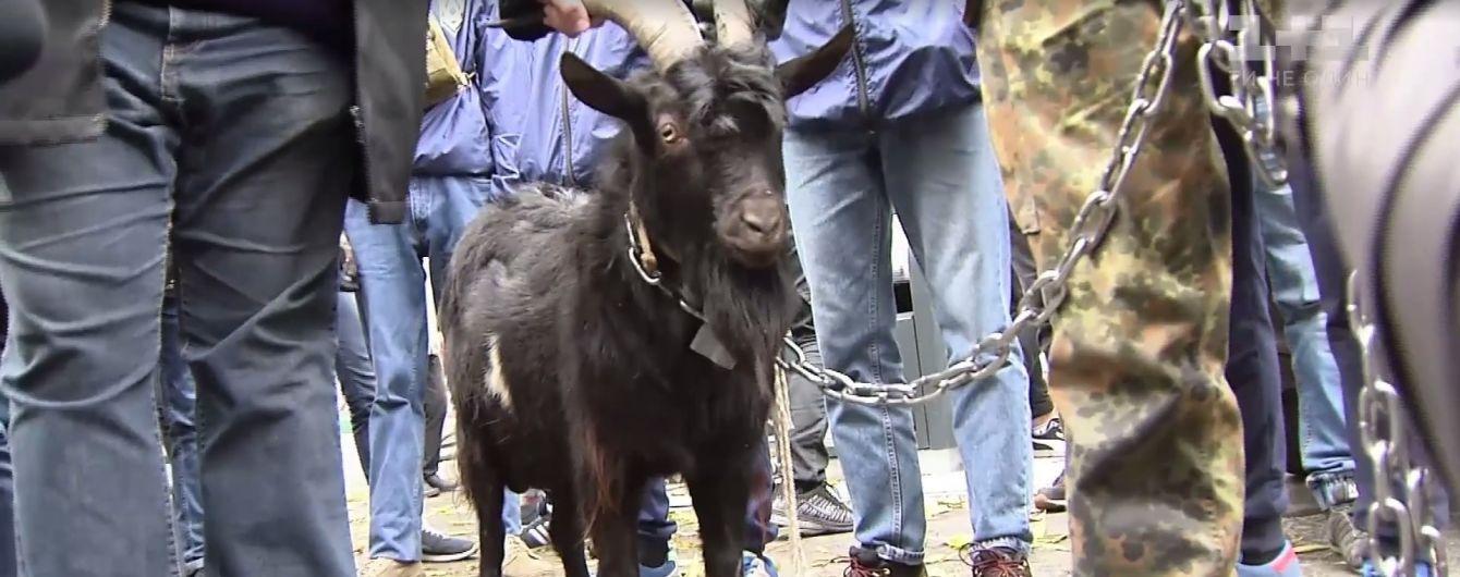 Украинцы привели козла в посольство Чехии из-за заявлений Земана