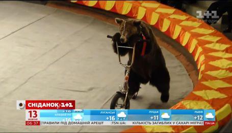 Цирк без тварин: чому громадські активісти продовжують боротьбу