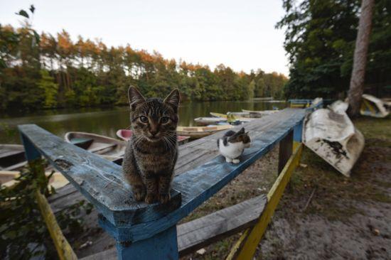 У Рівному вуличних котів можуть визнати частиною екосистеми міста