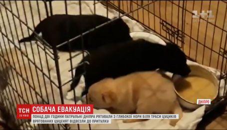 В Днепре патрульные более двух часов спасали щенков из норы