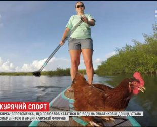 """Курка Лоретта стала зіркою у Флориді через своє захоплення кататися на дошці """"паддл"""""""