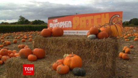 Английские фермеры готовятся к грандиозной ярмарке тыкв к Хэллоуину