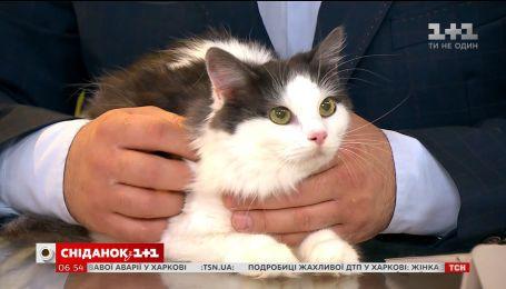 Лагідна кішечка Лаффі шукає домівку