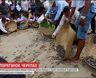 Более 5 тысяч редких амазонских речных черепах выпустили на волю природнозащитники в Перу