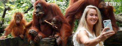 Світоліна перед вирішальним турніром року потоваришувала з орангутангами