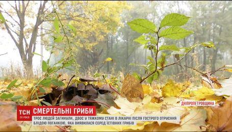 На Дніпропетровщині троє людей загинули внаслідок гострого отруєння грибами