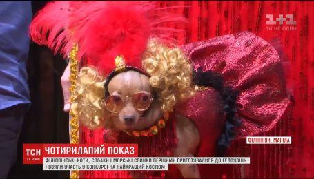 Четвероногий модный показ в Хэллоуину состоялся в филиппинской столице
