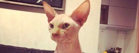 """У Чернігові зробили тату коту: зоозахисники обурені, господар каже про """"богоугодну справу"""""""