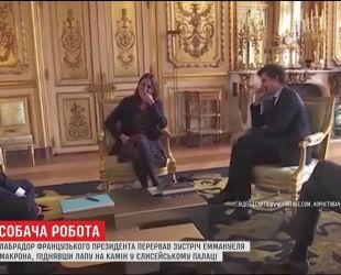 Лабрадор французького президента перервав ділову зустріч у Єлисейському палаці