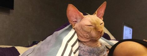 ТСН завітала до чернігівського салону, де набили тату коту Яші