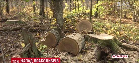 На Житомирщині нелегальні мисливці на дуб обстріляли лісників