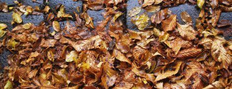 Дожди все еще не оставляют запад Украины. Погода на 24 октября