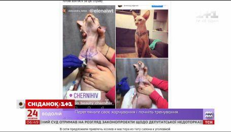 Фотографии татуированного кота возмутила зоозащитников