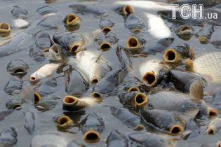 """Кримський рибокомбінат подав до суду проти України з вимогою виплатити 24 млн грн за """"зневоднення"""""""