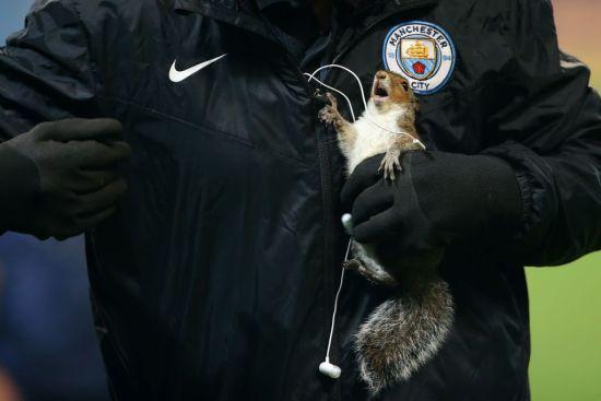"""Білка ввірвалася на поле перед матчем """"Манчестер Сіті"""" і """"завела"""" акаунт у Twitter"""